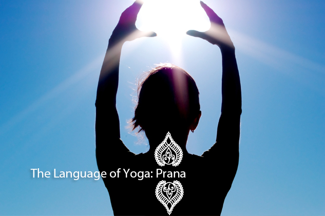 The Language of Yoga