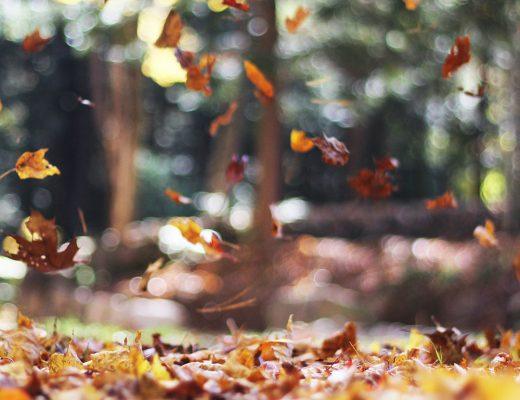 秋天的第一天在这里!很难相信这是时候再次 - 另一个季节性转变。